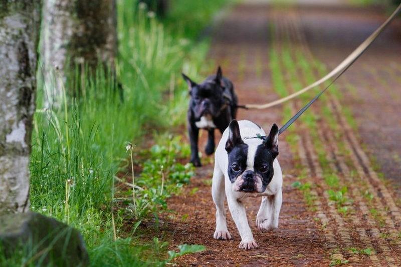 愛犬と私の散歩みち 第1回