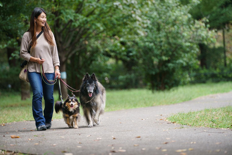愛犬と私の散歩みち 第2回